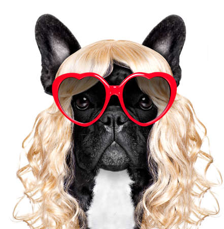 be209a420a1622 funny crazy silly french bulldog dog wearing a blonde curly wig for mardi  gras carnival or