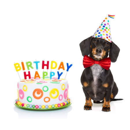 Dachshund Or Sausage Dog Hungry For A Happy Birthday Cake With Candles Wearing Red Tie And Party Hat Isolated On White Background Lizenzfreie Bilder Und