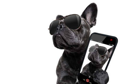 Foto de cool trendy posing french bulldog with sunglasses looking up like a model , taking a selfie , isolated on white background - Imagen libre de derechos