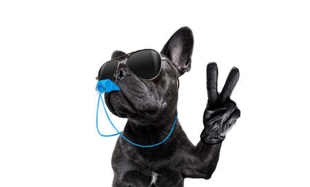 Photo pour referee arbitrator umpire french bulldog dog blowing blue whistle in mouth  whit peace or victory fingers , isolated on white background - image libre de droit