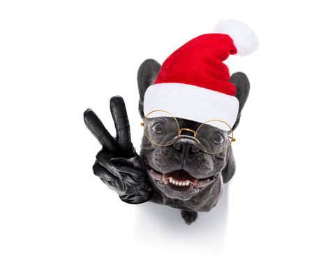 Photo pour french bulldog santa claus dog celebrating new years eve with owner and champagne  glass isolated on white background , wide angle view - image libre de droit