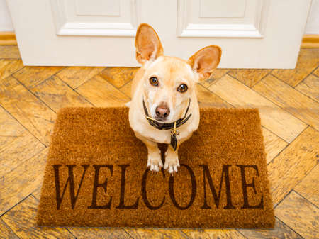 Foto de podenco dog waiting for owner to play  and go for a walk on door mat ,behind home door entrance and welcome sign - Imagen libre de derechos