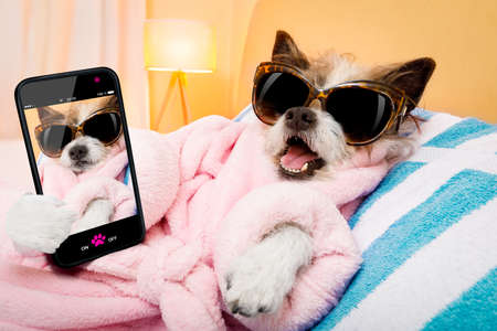 cool funny poodle dog resting and relaxing in spa wellness salon center ,wearing a bathrobe and fancy sunglasses, taking a selfie with smartphone or cell phone