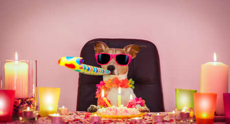 Photo for Happy jack russell dog having a party with serpentine streamers, for  birthday  and blowing a whistle horn - Royalty Free Image