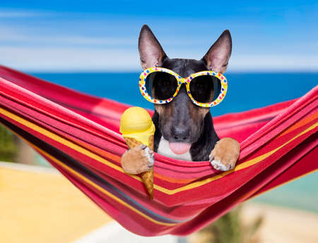 Photo for bull Terrier  dog resting and relaxing on a hammock or beach chair under umbrella at the beach ocean shore, on summer vacation holidays eating a waffle cone of vanilla ice cream - Royalty Free Image