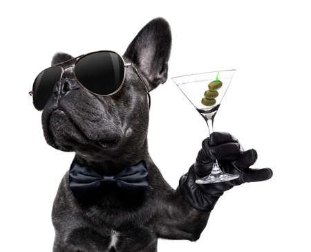 Foto de cool drunk french bulldog  dog cheering a toast with martini cocktail drink , looking up to owner ,   isolated on white background - Imagen libre de derechos