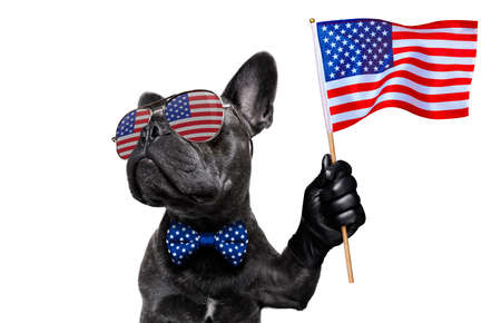 Photo for french bulldog waving a flag of usa and victory or peace fingers on independence day 4th of july with sunglasses - Royalty Free Image