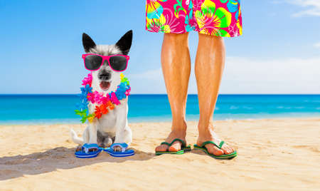 Photo for Dog and owner sitting close together at the beach on summer vacation holidays, close to the ocean shore, wearing fancy funny sunglasses - Royalty Free Image