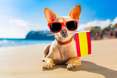 Photo pour Cool chihuahua resting on the beach with a Spain flag - image libre de droit
