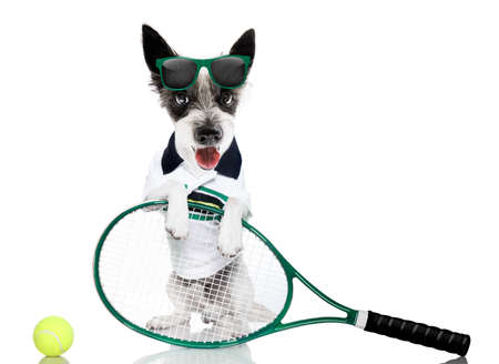 Photo for poodle  dog with owner as tennis player with ball and racket or racquet isolated on white background, ready to play a game - Royalty Free Image