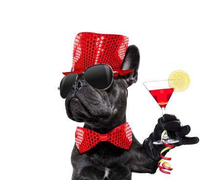 Photo for Dog celebrating new years eve with champagne isolated on white - Royalty Free Image