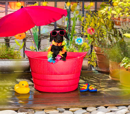 Photo for Dog in a bathtub or bucket refreshing in summer at the balcony with umbrella on vacation - Royalty Free Image