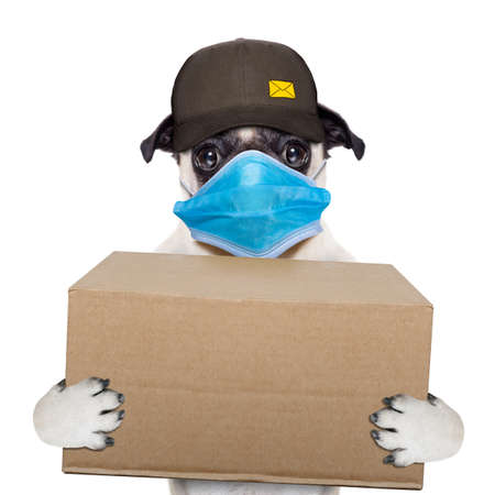 Photo for postman pug dog delivering a big brown package, in covid 19, cornavirus, virus time - Royalty Free Image
