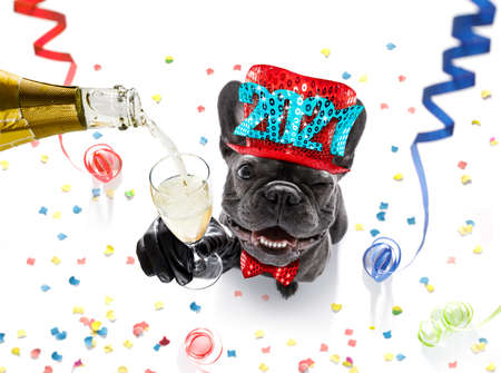 Photo pour french bulldog dog celebrating new years eve with owner and champagne glass isolated on serpentine streamers and confetti - image libre de droit