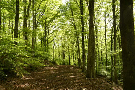 Photo pour beautiful beech forest in the Apennine mountains near Arezzo. Italy - image libre de droit