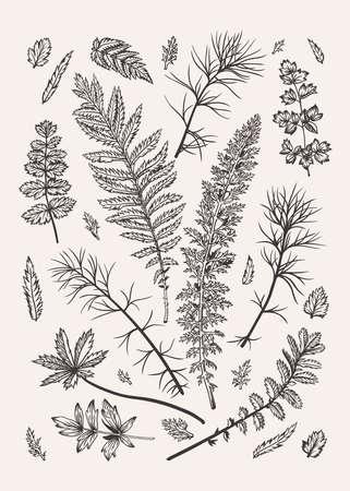 Illustration pour Set with leaves. Vector illustration. Design elements. Black and white. - image libre de droit