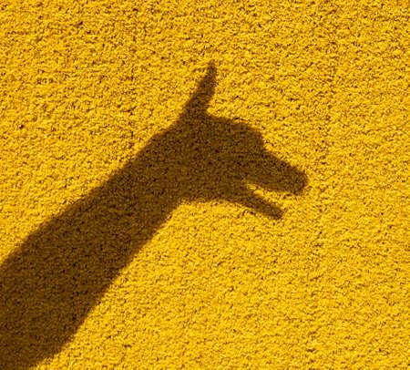 Dog shadow on yellow wall, focus on shadow