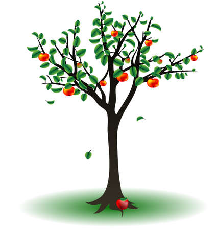 on a white background is the apple tree