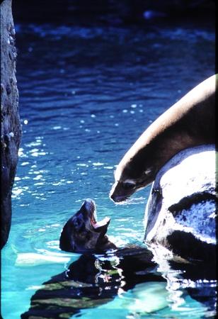 Seals conversing
