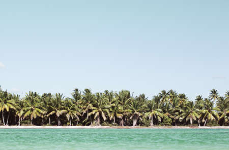 Beautiful exotic landscape with palm trees along the sea shore and clear blue water