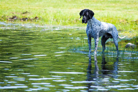 This dog was facsinated with watching the tadpoles in the pond
