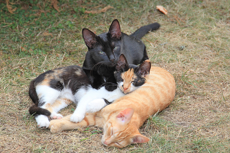 kittens have a rest outdoors
