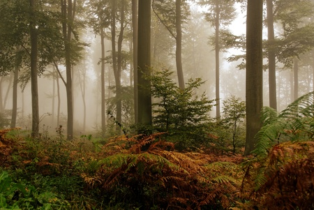 misty atmosphere in the forest