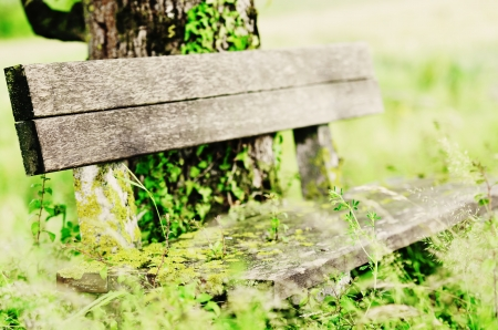 an old wooden bench overgrown