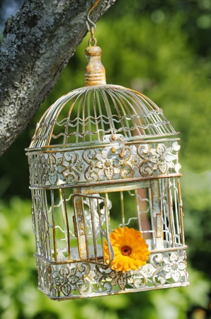 Photo for an open  bird cage  with a flower inside - Royalty Free Image