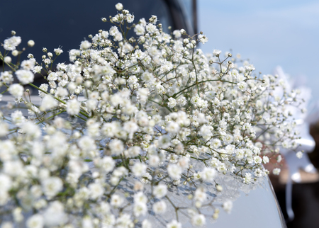 hood of a car decorated with flowers of gypsophila