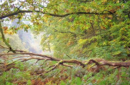 dep forest landscape
