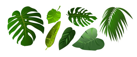 Illustration pour Tropical leaves of Monstera and jungle palm illustration set. Elements isolated on white background. Flat style design plants. - image libre de droit