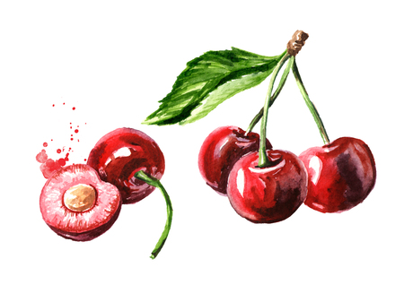 Photo for Fresh ripe cherry. Watercolor hand drawn - Royalty Free Image