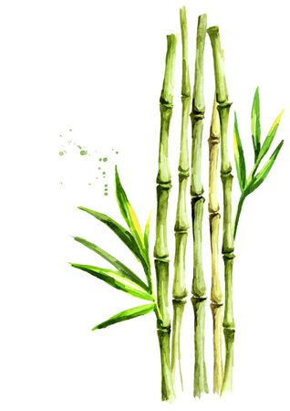 Photo pour Green bamboo stems and leaves - image libre de droit