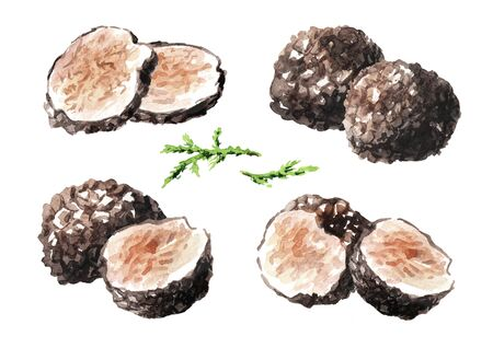 Foto de Black truffle mushrooms with forest green moss branch set, Watercolor hand drawn illustration  isolated on white background - Imagen libre de derechos