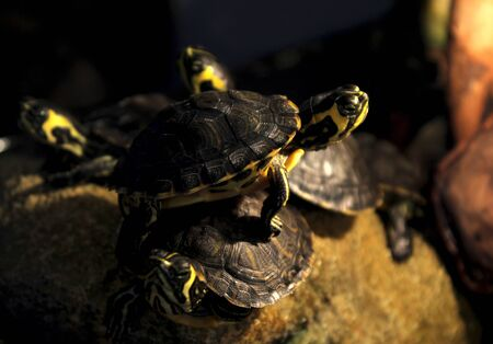 Small turtles