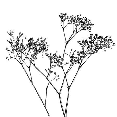 Illustration pour baby's breath flower, gypsophila vector drawing, coloring book, tattoo idea - image libre de droit