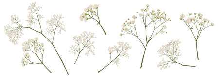 Illustration pour babys breath flower, gypsophila hand drawn, isolated vector illustration set. coloured. Invitations, gift card, wedding, greetings, anniversary decorations. Bouquet element. Green, ivory, beige - image libre de droit