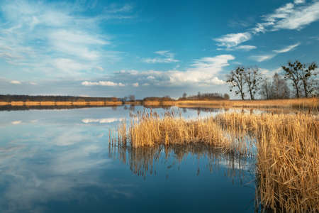 Photo pour Dry yellow reeds in the blue lake and clouds reflecting in the water - image libre de droit