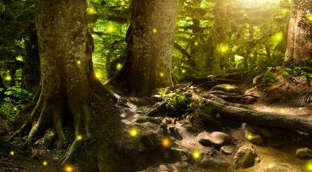 Photo pour fantastically beautiful, mysterious, fairy-tale forest - image libre de droit