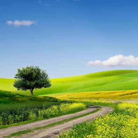 Photo pour Green Grass Field Landscape with fantastic clouds in the background - image libre de droit