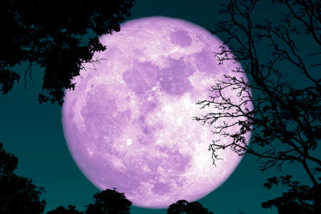 Photo pour full crust moon back on silhouette plant and trees on night sky - image libre de droit