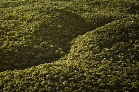 Sunrise. Green hills of forest.The Crimea.
