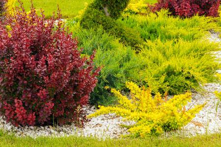 Photo pour the element of garden decor colorful small trees gardening - image libre de droit