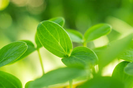 Foto de seedling leaves of cucumber closeup of a growing plant - Imagen libre de derechos