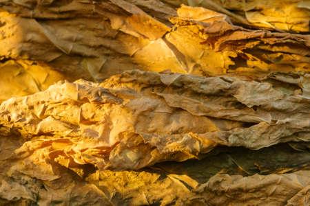Photo pour dry tobacco leaf close-up macro - image libre de droit