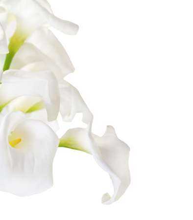 Bunch of Cala Lilies in high key isolated on white