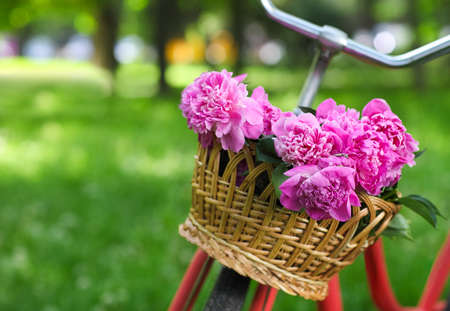 Photo pour Vintage bicycle with basket with peony flowers in the spring park - image libre de droit