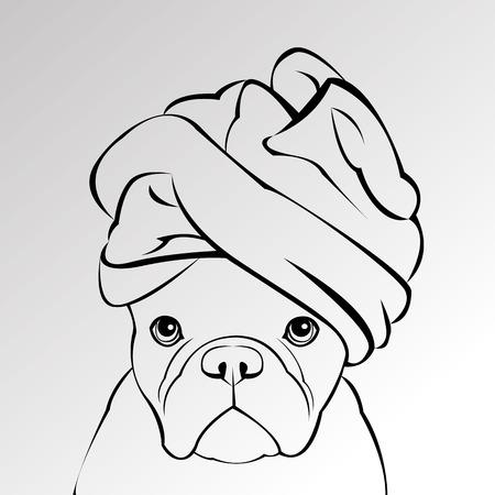 bulldog, dog, animal, french, vector, illustration, pet, breed, cute