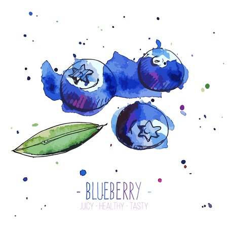Watercolor blueberries with splashes in free style. Fresh and juicy colors. Hand drawn isolated on white background. Vector illustration